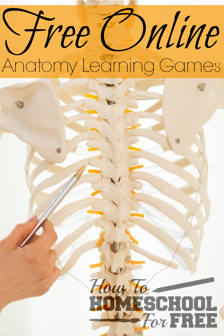 Add these FREE Online Anatomy Learning Games to your homeschool!